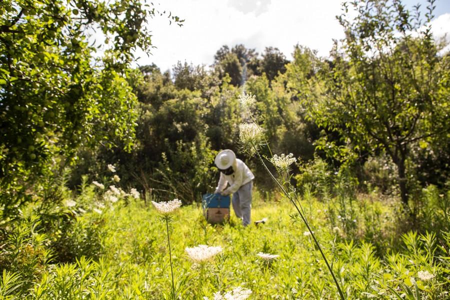 apiculteur dans un champ
