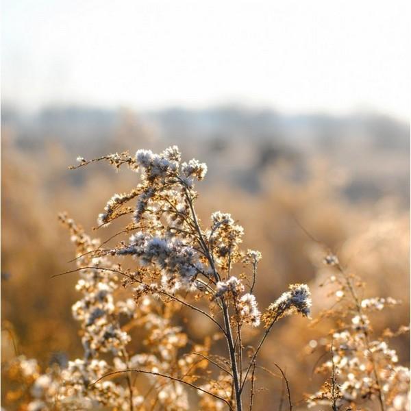fleur qui contient du pollens